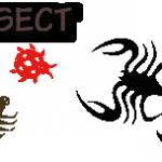 Carolina satyr – (INVERT-insect) See facts