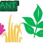 Intertidal plants – (HABITAT-plant) See facts