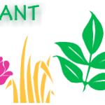 Bandanna of the Everglades – (HABITAT-plant) See facts