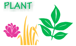 habitat-plants-why-kids